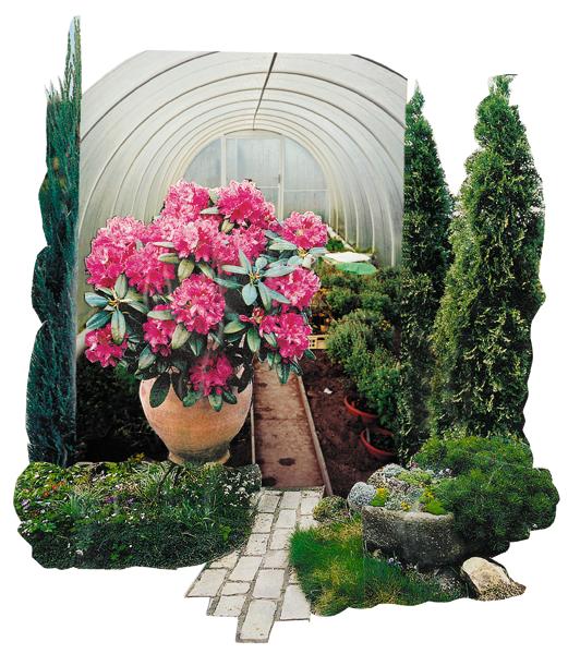 Prodej okrasných rostlin